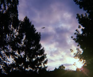 atmosphere, beautiful, and birds image