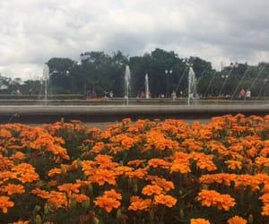 flowers, sky, and orange image