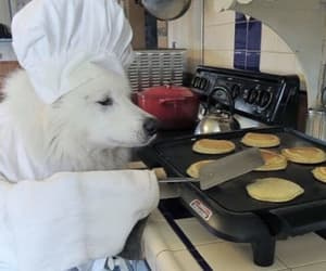 puppy, hotcakes, and cute image