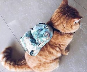 cat, mochila, and gato image