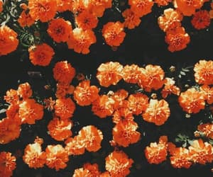 wallpaper, flowers, and orange image