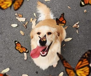 animals, butterfly, and cutie image