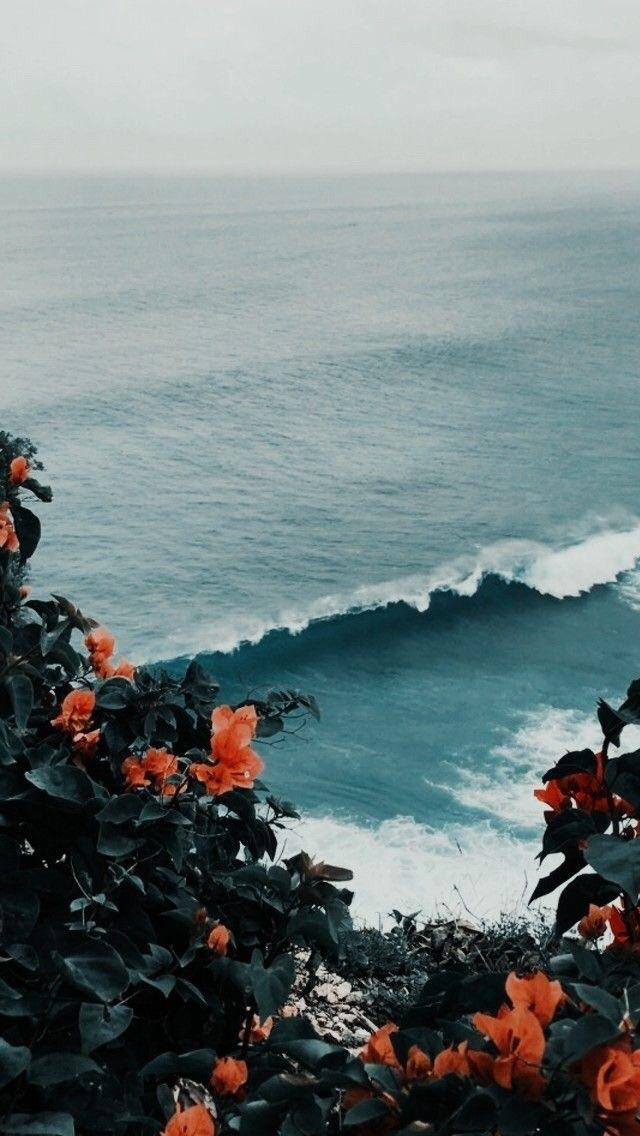 flowers, ocean, and wallpaper image