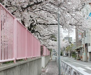 pink, japan, and pale image