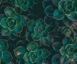 magic, succulents, and wallpaper image