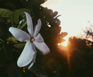 dawn, flower, and nature image