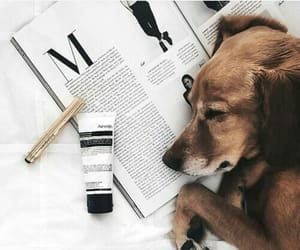 aesthetic, grunge, and puppy image