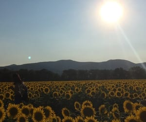 champs, tournesols, and field image