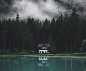 landscape, nature, and forest image