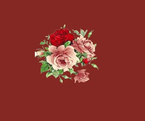 aesthetic, dark red, and flower image
