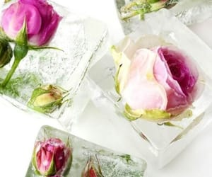 flowers, summer, and ice cubes image