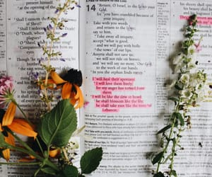 aesthetics, reading, and bible image