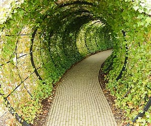 tunnel, plants, and uk image