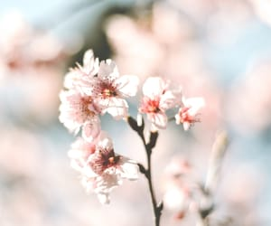 flower, nature, and pink image