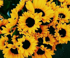 article and sunflower image
