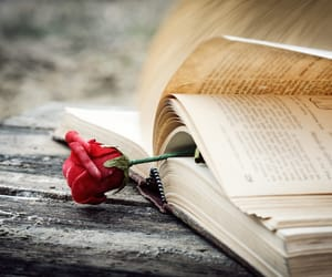 books and rose image