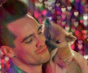 brendon urie, dog, and gif image