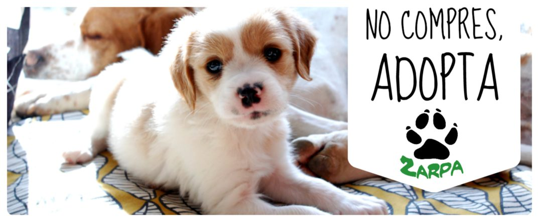 adopt, Gatos, and pet image