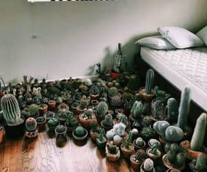 cactus, plants, and room image