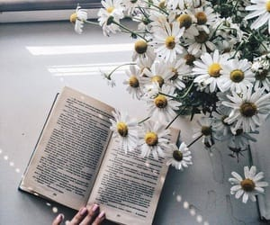 bible, book, and studying image