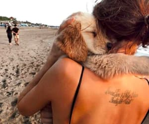 article, beach, and dog image