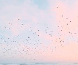 birdies and sea image
