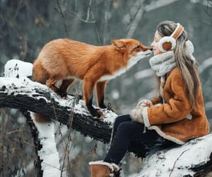 fox, nature, and girl image