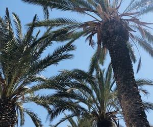 blue, palm, and palms image