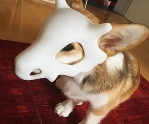 dog, pokemon, and cute image