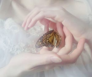 butterfly, aesthetic, and soft image