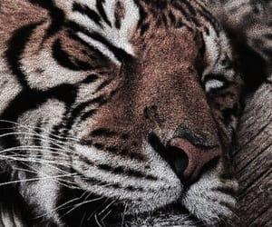 theme, tiger, and animal image