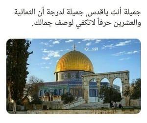 arab, arabic, and قدس image