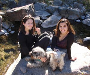 dogs, sisters, and family image