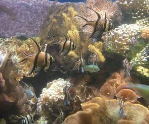 aquarium and fish image