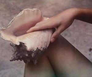 art, inspiration, and shell image
