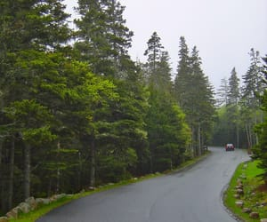 Maine, trees, and national park image