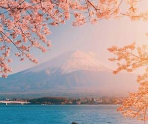 city, japan, and sakura image