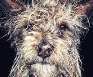 animals, django, and dog image