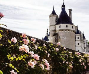 castle and roses image