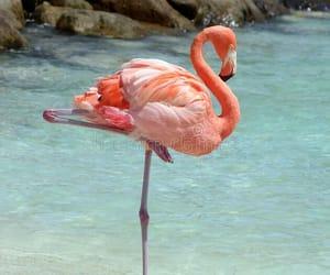 <3, flamingo, and beach image