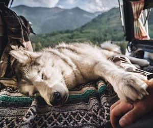 dog, nature, and friend image