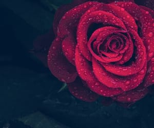 aesthetic, grunge, and rose image