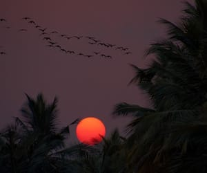 sunset, grunge, and bird image
