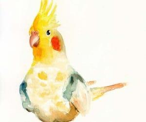 animal, cockatiel, and watercolor image