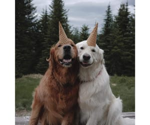 dark and light, golden retriever, and happy image