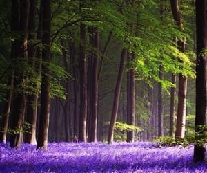 forest, home, and purple image