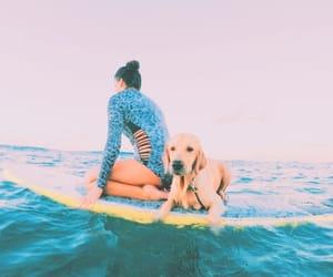 summer, dog, and surf image