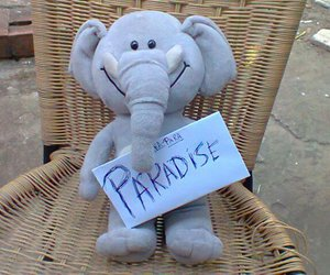 paradise and coldplay image