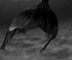 mermaid, black, and sea image