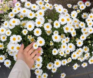 flowers and u.u image